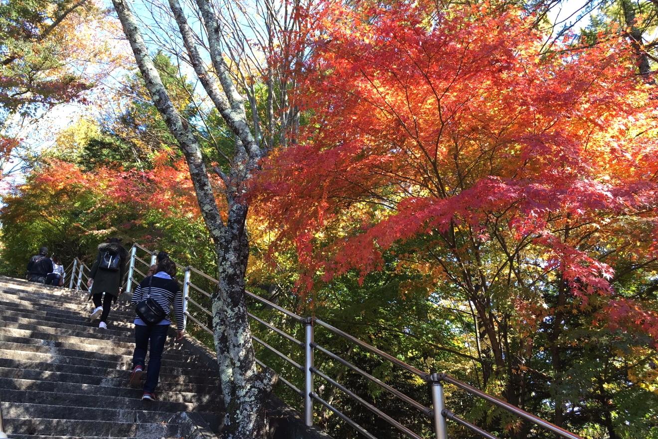 忠霊塔へ続く階段の紅葉