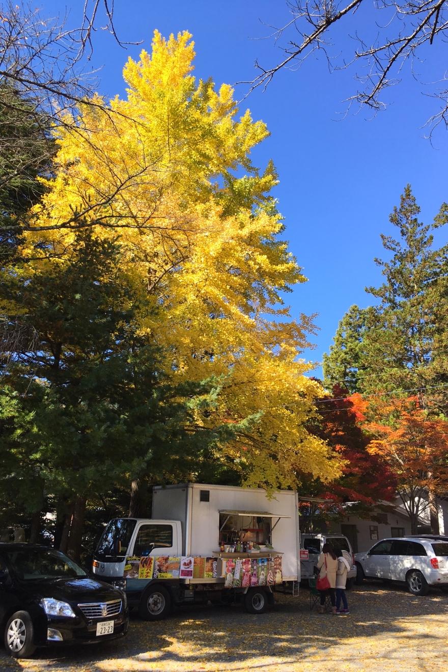 新倉富士浅間神社境内のいちょう