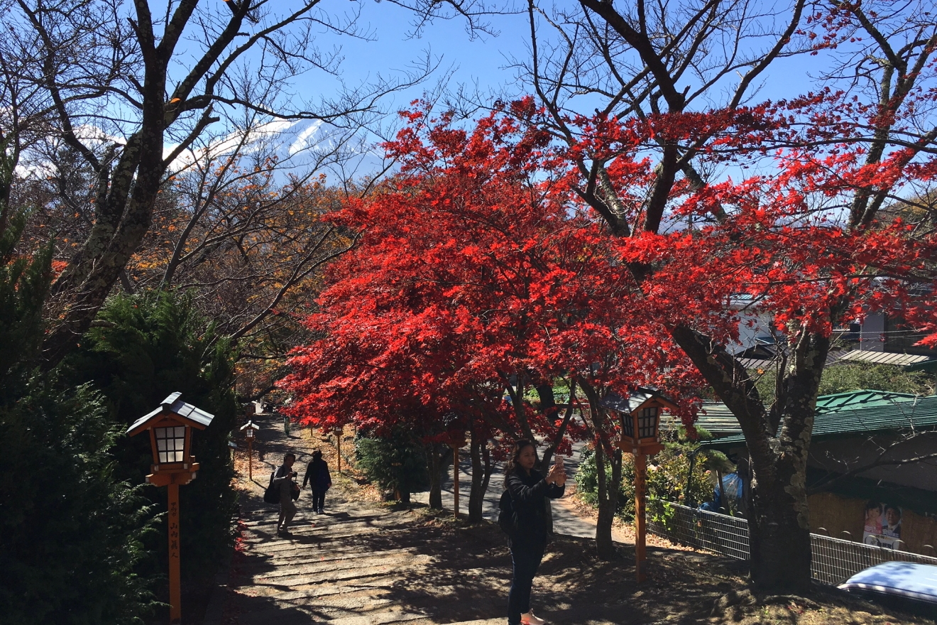 新倉富士浅間神社参道の紅葉
