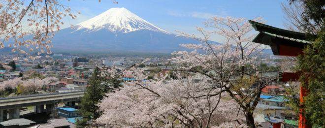 2018新倉山浅間公園桜まつり