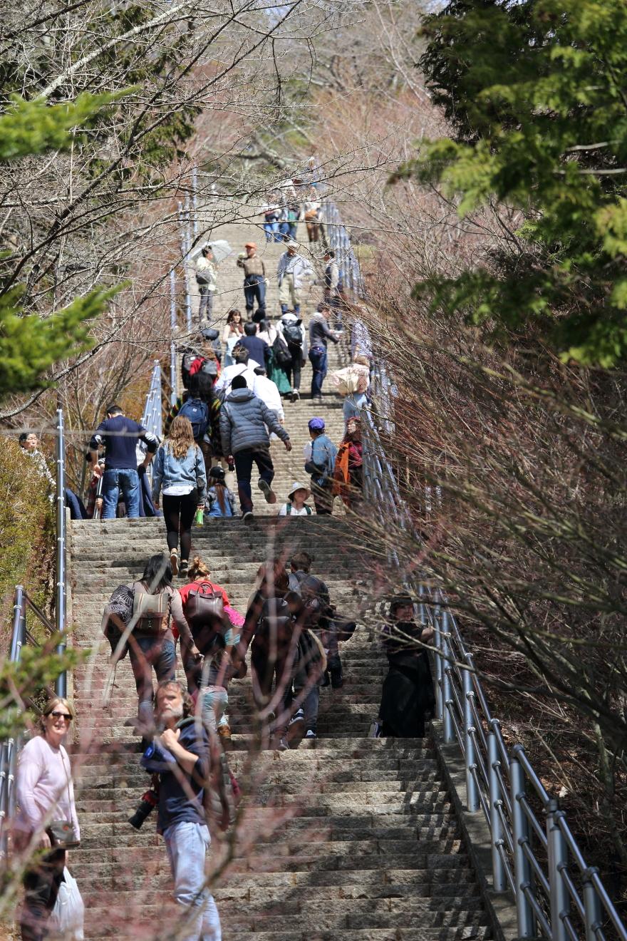 新倉山浅間公園咲くや姫階段