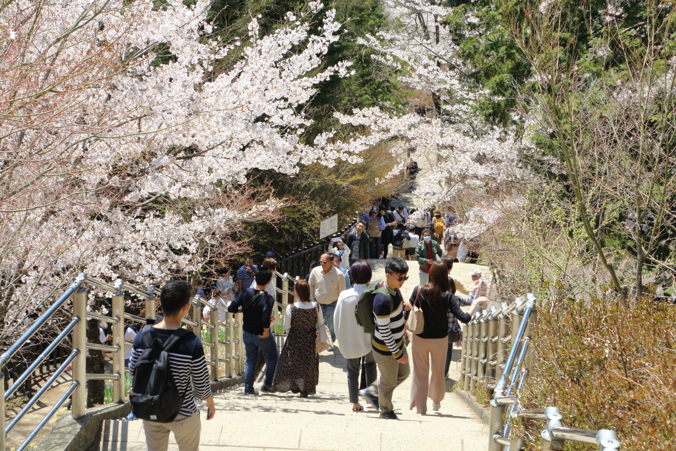 咲くや姫階段の混雑