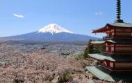 忠霊塔桜の開花状況