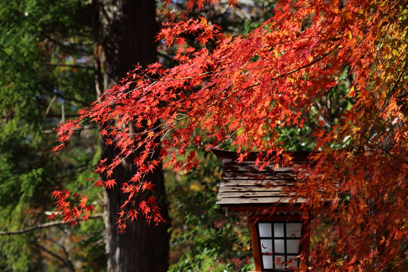赤く色付いた忠霊塔のもみじ