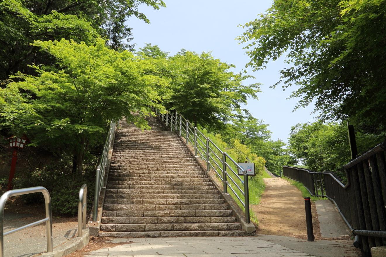 咲くや姫階段:新緑