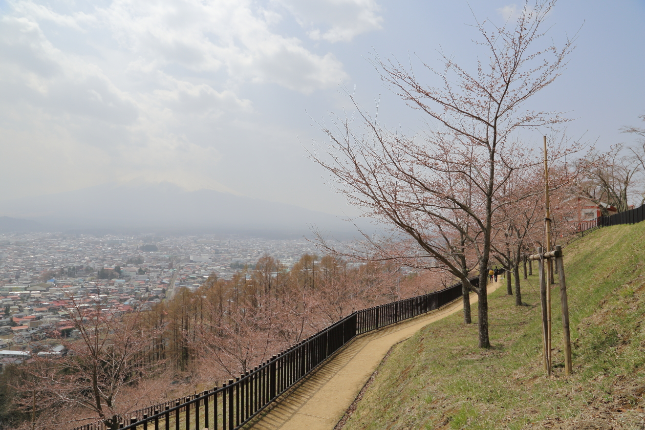 新倉山浅間公園の遊歩道の桜