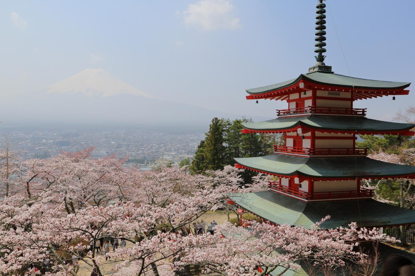 新倉山浅間公園桜の開花状況