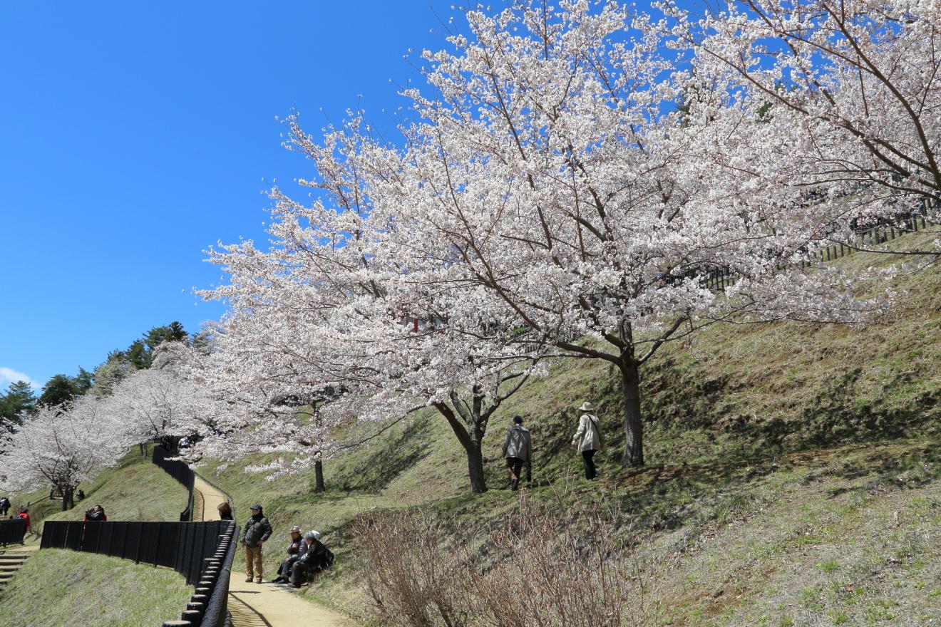 新倉山浅間公園遊歩道