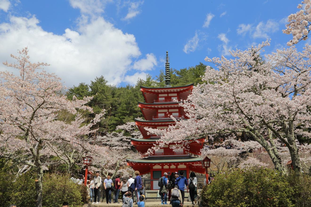 新倉山浅間公園桜