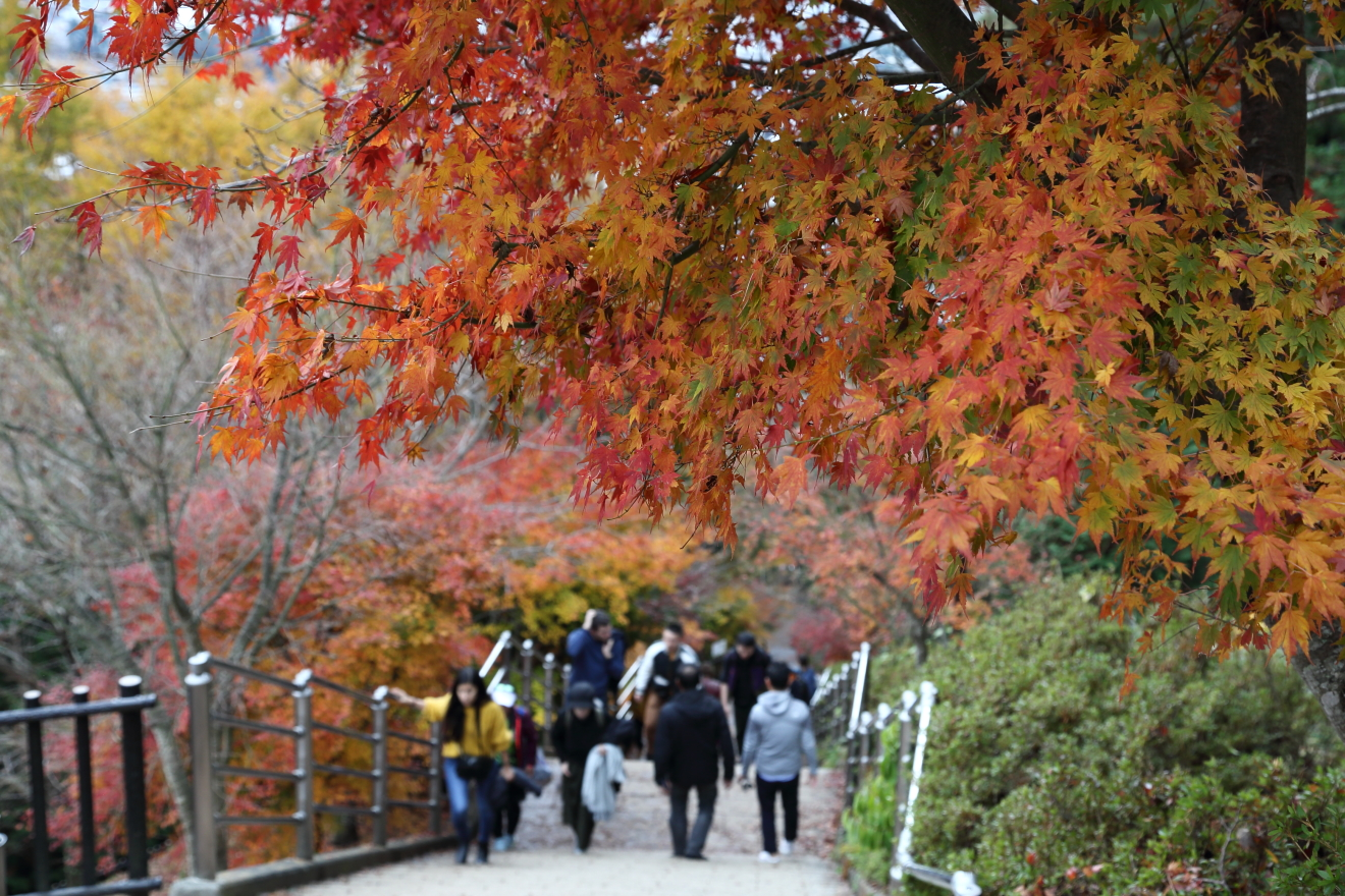 多くの観光客で賑わう咲くや姫階段