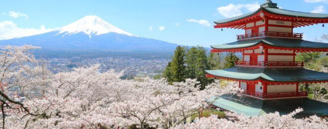 新倉山浅間公園の桜
