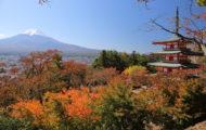 新倉山浅間公園紅葉情報