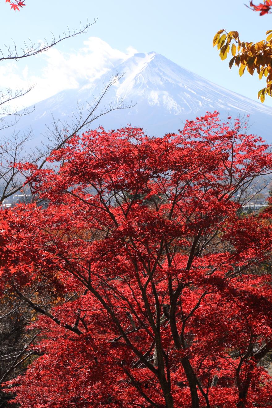 新倉富士浅間神社の紅葉