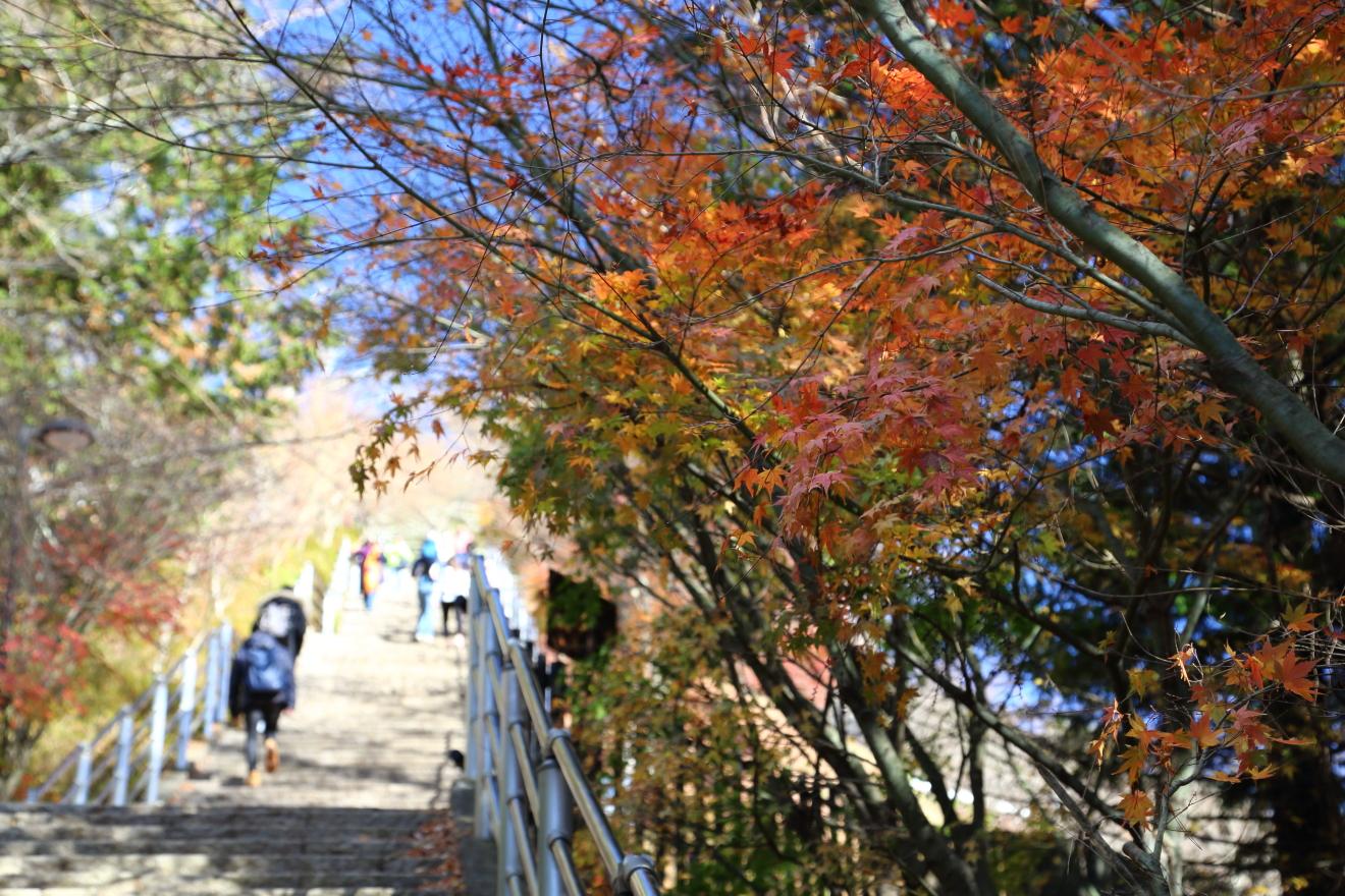 咲くや姫階段:もみじ