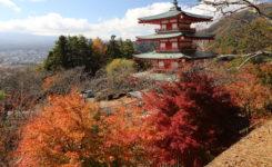 新倉山浅間公園紅葉状況
