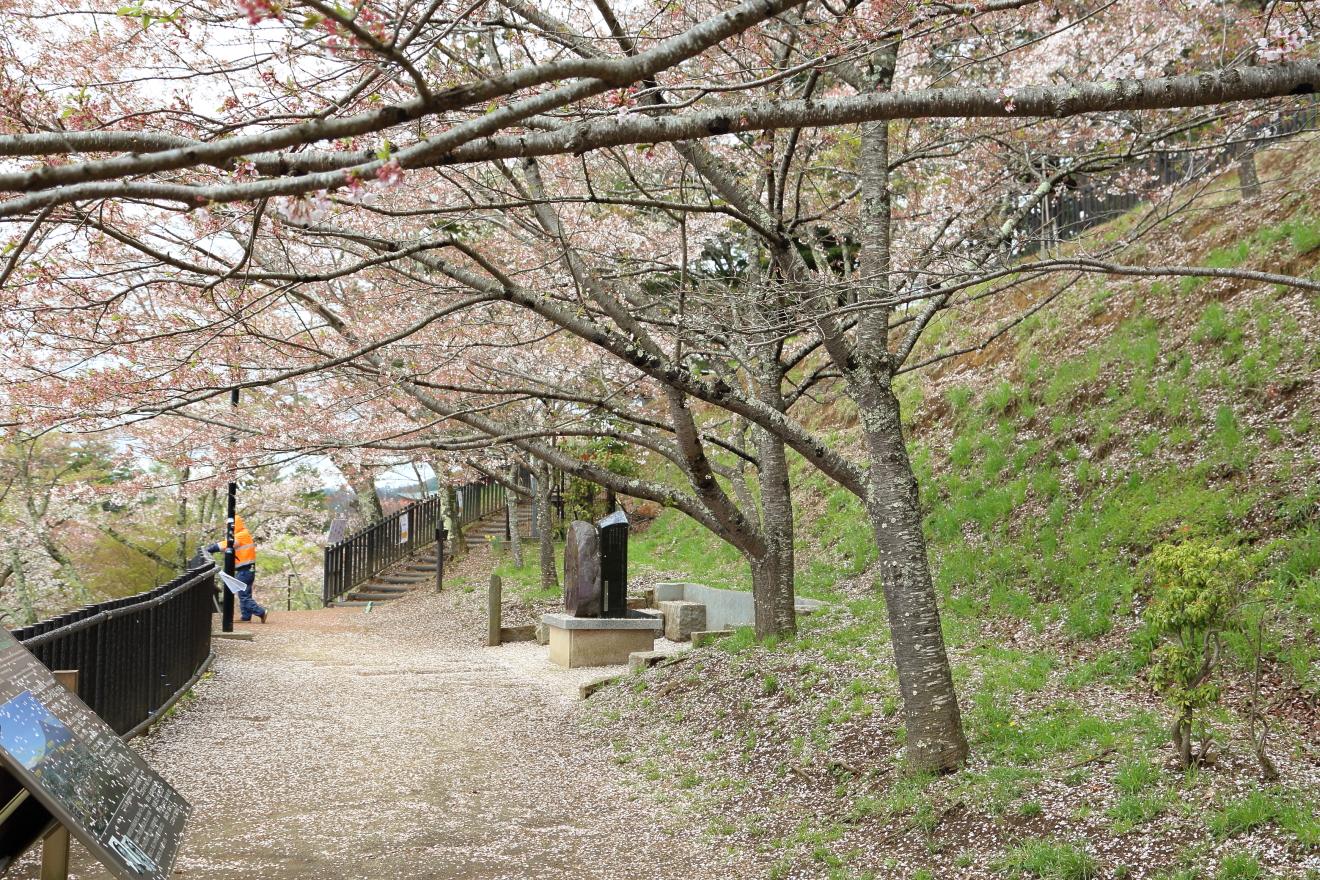 新倉山浅間公園:散った桜