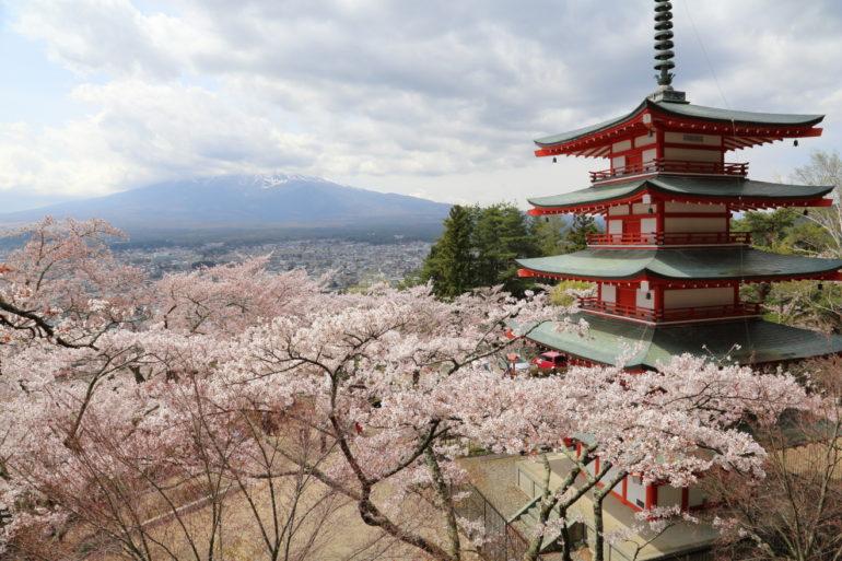忠霊塔:桜
